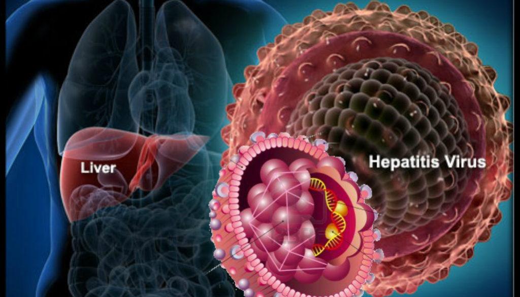 hepatitis-B-virus
